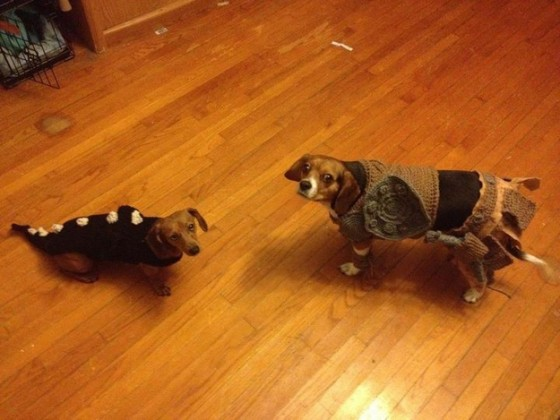 skyrim-dog-costumes-2-560x420