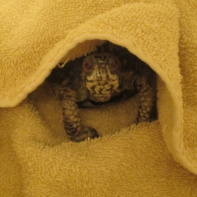 A picture of Turtle pretending to be a turtle taco?? How did this get in here?