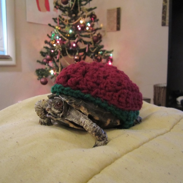 Turtlesweater