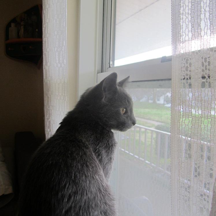 quarantine window watching1